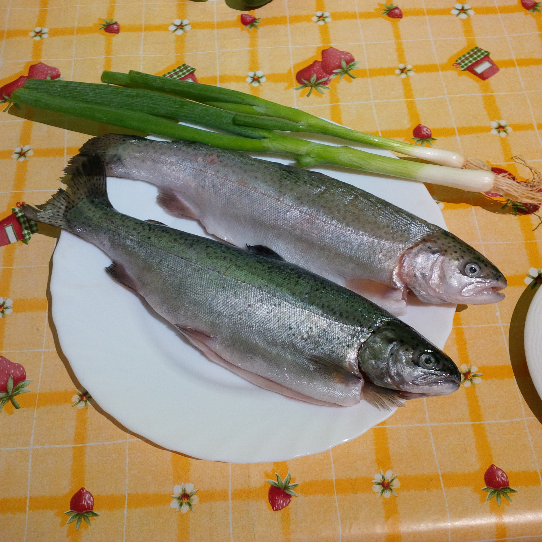 Forelle oder pastrva ist ein beliebter Süßwasserfisch in Kroatiens Norden (Photo credit: Veronika Wengert).